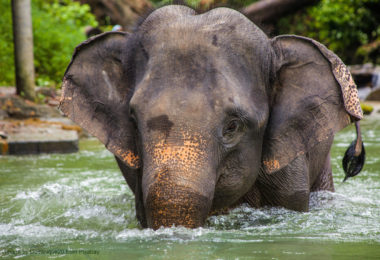 World Animal Protection – Volunteer with Elephants