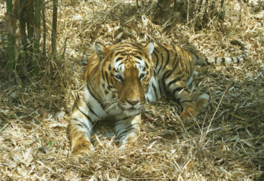 Cats Protection Nepal Trek and Tiger Conservation Experience 2021