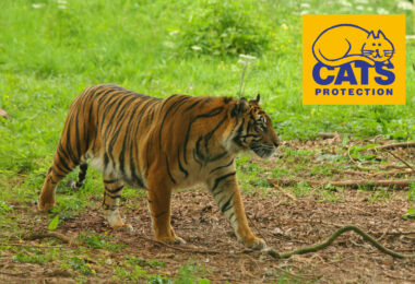 Cats Protection Nepal Trek and Tiger Conservation Experience 2022